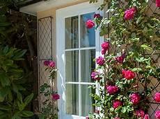 piante da terrazzo perenni piante ricanti rubiera reggio emilia sempreverdi