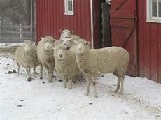 farm animals lhf kids