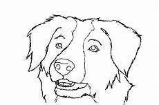 border collie free colouring pages