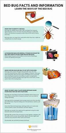 bed bugs facts infographic assured environments