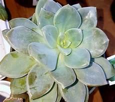 plante succulente entretien plantes grasses succulentes jardin dion