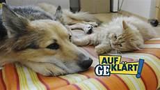 Aufgekl 228 Rt Darf Ein Vermieter Haustiere Verbieten