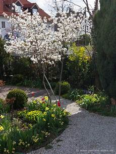 Die Schönsten Gartenbäume - geniesser garten pflanzplanung die schoensten gehoelze