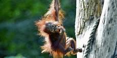 widerstand gegen h 246 here zoo preise