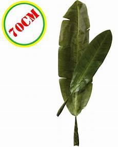 feuille de bananier soie artificielle 70 cm le deguisement