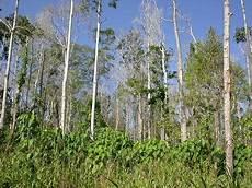 Ekologi Hutan Ekosistem Hutan Musim