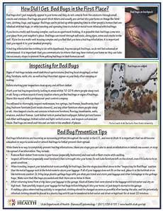 facts about bed bugs tooele county health department
