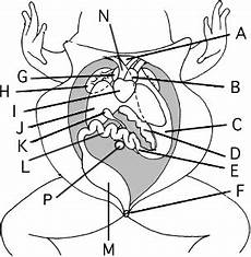 frog anatomy diagram labeled student guide to the frog dissection