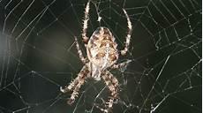 angst vor spinnen angst vor spinnen und schlangen ist uns in die wiege