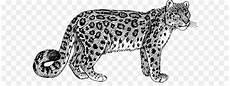 Macan Tutul Jaguar Felidae Gambar Png