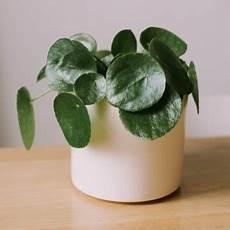 plante exotique int 233 rieur en livraison les fleurs de nicolas
