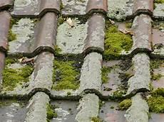 mousse sur le toit comment nettoyer une toiture pleine de mousse