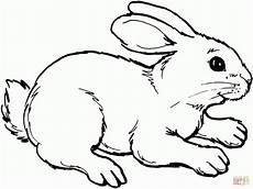 Ausmalbild Hase Und Igel Hasen Ausmalbilder Ausmalbilder Hasen Ausmalbild Hase