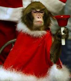 merry christmas monkey picture funny monkey pics with quotes funny monkey 3 ideas for the house funny monkey pictures