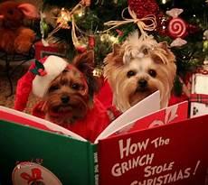 merry christmas yorkie images yorkie christmas reading i yorkies pinterest