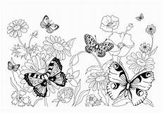 Ausmalbilder Blumen Schmetterlinge Malvorlage Schmetterling Kostenlos 5 Malvorlage