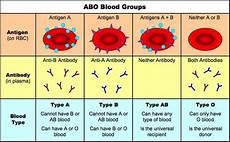 Prepare A Pedigree Chart For Blood Group Patterns Of Inheritance Bioninja