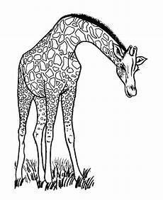malvorlagen giraffe tiffanylovesbooks