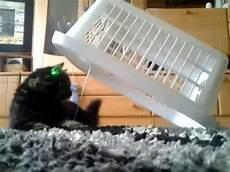 Katzenfalle Selber Bauen - katzenfalle d