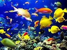 Liat Ikan Ikan Di Laut Langsung