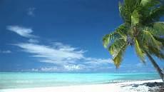 palm swaying at idyllic tropical beach youtube
