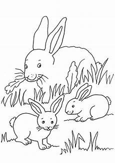 Malvorlage Hasenbaby Kostenlose Malvorlage Kaninchen Kaninchenfamilie Zum Ausmalen