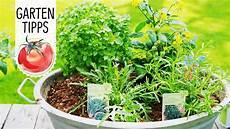urban gardening tipp mediterrane vorspeise im