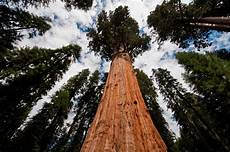 eqoi7a national parks sequoia and another header