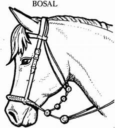 Gratis Malvorlagen Tiere Pferd Mit Bosal Ausmalbild Malvorlage Tiere