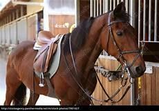 Malvorlage Pferd Mit Sattel Brown Pferd Mit Sattel Und Z 252 Gel Lizenzfreies Bild