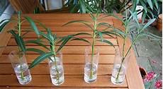 das alte europa das oleander experiment