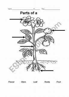 parts of plants worksheets for grade 1 13695 parts of a plant esl worksheet by teacher rainbow
