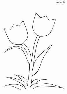 Ausmalbilder Blumen Tulpen Ausmalbilder Tulpen Gratis Kostenlos Zum Ausdrucken