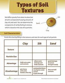 plants and soil worksheets 13633 138 best images about soil unit science on different types of anchor charts and