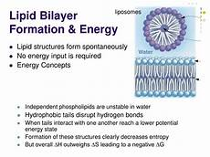 ppt lipids membranes the first cells powerpoint presentation id 390113