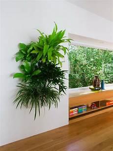 h 228 ngende pflanzen als indoor dekoration archzine net