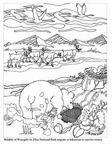 animal migration worksheets 13956 animal migration coloring pages 193 llatok erdő