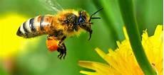 Subhanallah Inilah Mukjizat Lebah Madu Republika