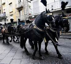 carrozza funebre roccapiemonte botti durante funerale muore cavallo carro