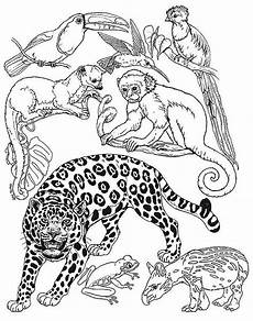 coloring pages animals in the forest 17029 rainforest animals small for rainforest diarama rainforest animals animals animal habitats