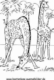 Malvorlagen Giraffen Gratis Pin Auf Afrika Thema