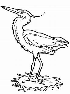 Vogel Malvorlagen Word Vogel Malvorlagen Malvorlagen1001 De
