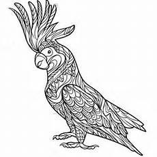 papagei ausmalbilder f 252 r erwachsene kostenlos zum ausdrucken