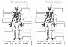 ks2 skeleton worksheet the skeleton and muscles powerpoint and worksheets by