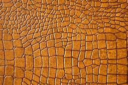 My Toroool HD Wallpaper Of Brown Snake
