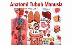 Anatomi Tubuh Manusia Fungsi Sistem Organ Tubuh Manusia