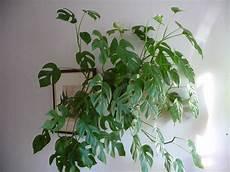 plantes grasses d appartement photo de plantes vertes d