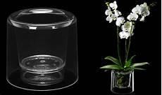 orchidea vaso trasparente come curare le orchidee tutti i segreti giardango