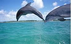 Malvorlagen Delfin Verde Los Delfines Bajo El Agua Fondos De Pantalla Gratis