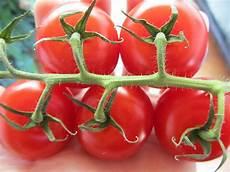 Wie Gesund Sind Tomaten - wie gesund sind tomaten wie lycopin in tomaten vor krebs